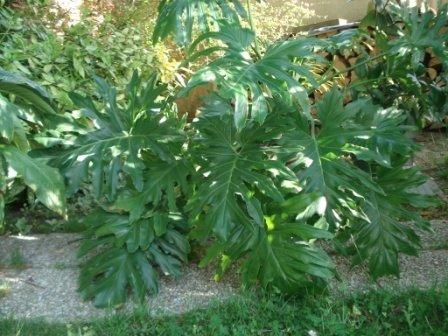 Vivre l 39 instant pr sent plantes et fleurs tr s toxiques for Plante toxique chien