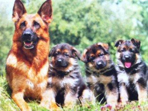 Nos amis les animaux .....Mère avant tout dans animaux-sauvetage-barbarie animale-divers photo21-300x224