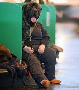 Elle a du chien !!!! dans animaux-sauvetage-barbarie animale-divers elle-a-du-chien_91626_w460-265x300