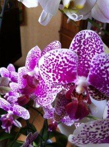 iphone-467-224x300 dans legumes -epices - fleurs -champignons-FRUITS-huiles ess